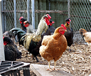 Michigan to Criminalize Small Family Farms with chickens, goats, honey bees and more