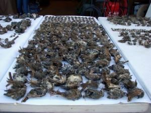 mining_claim_bird_deaths