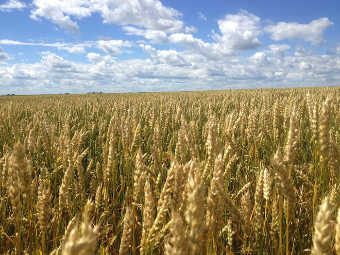 Farmers Losing Control Over Their Seeds. Harper Government Being Run Like A Business, For Big Business