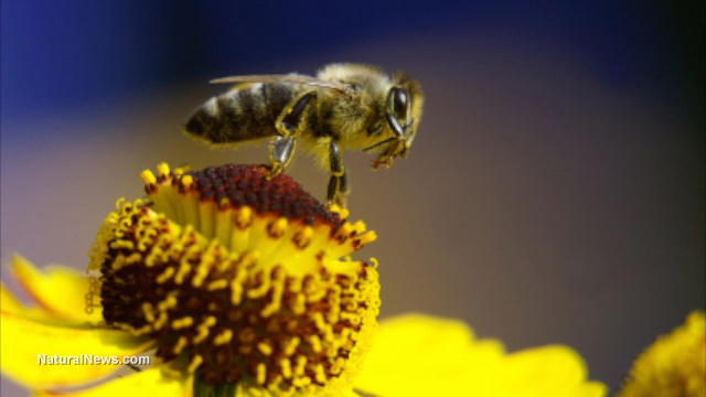 EPA decision to destroy environment with bee-killing pesticides overruled by federal judge