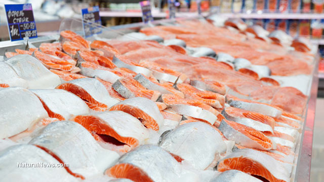 U.S. retailers begin taking farmed fish off their shelves as antibiotic overuse destroys fish farming industry