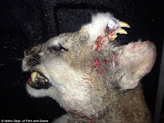 Radiation from Fukushima Causing MUTANT Animals in USA