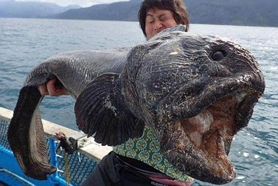 Pacific Coast fishermen provide proof (photos) that Fukushima is contaminating U.S. fish with radioactive material
