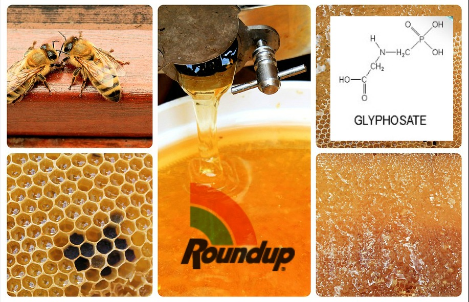 FDA Finds Monsanto's Roundup In Honey Samples Across America