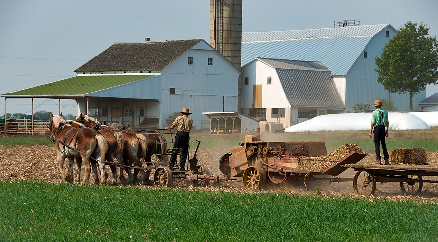 USDA Attacks Amish Farmers Selling REAL Food to Protect Corporate Industrial Farming