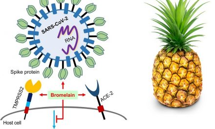 Is Pineapple Enzyme Bromelain a Remedy for COVID-19 Vaccine Injuries?